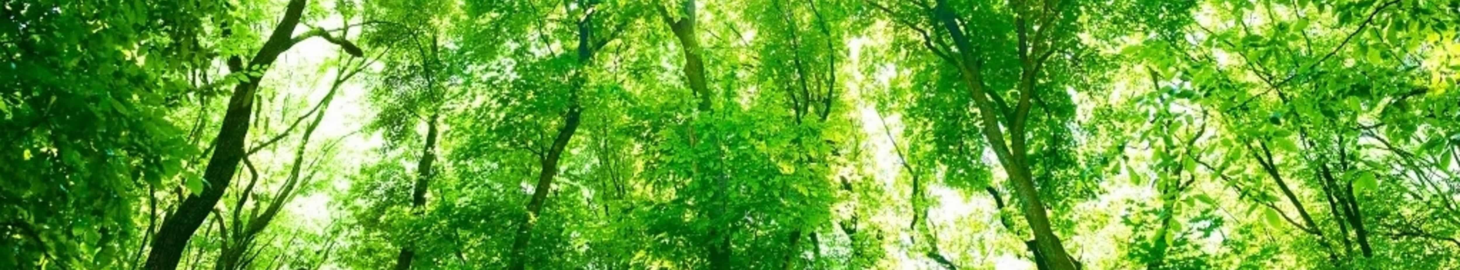 bg_trees_gorman-cropped 3
